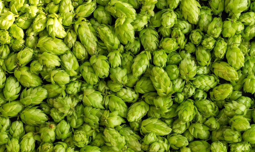 A Guide to Dry Hopping