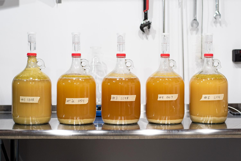 Split batch brewing - 5 1 gallon batches.
