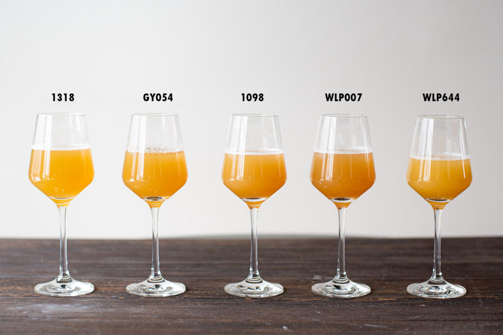 1 NEIPA Split With 5 Different Yeast Experiment sampling