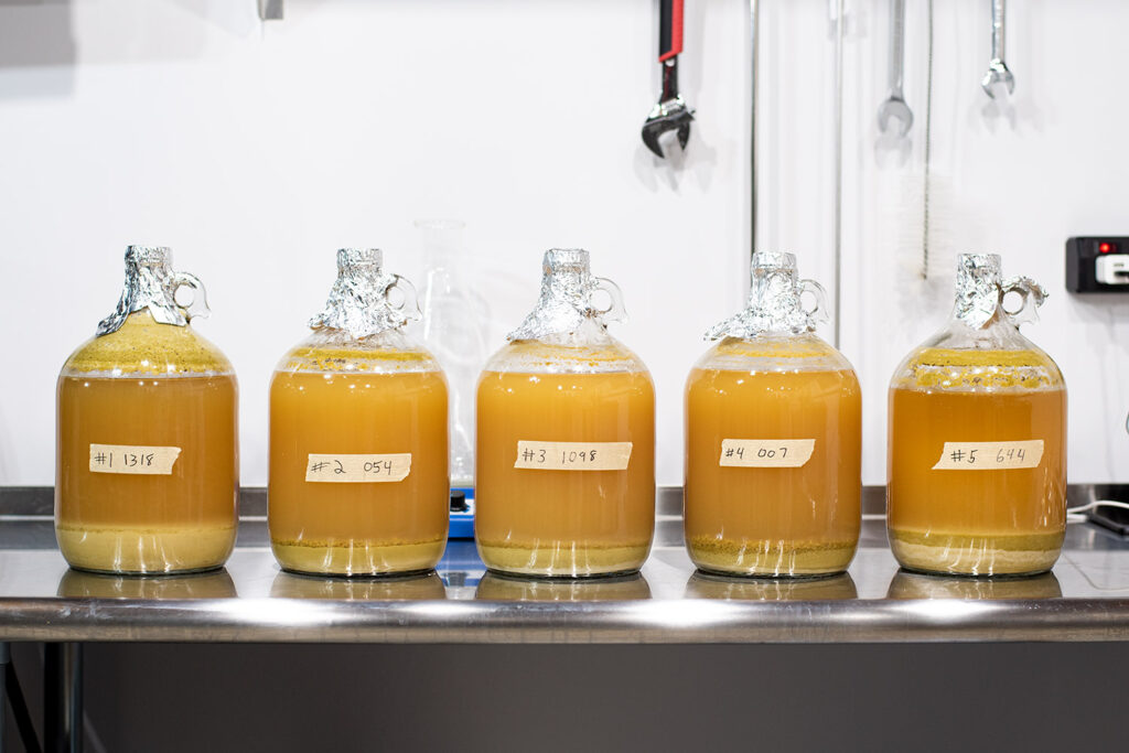 1 NEIPA Split With 5 Different Yeast Experiment after cold crash